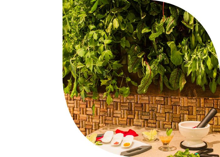 ISPA,Spa Evangeline,Spa Design,Spa Consulting,Living Wall,Spa Living Wall,spa consultant,spa consulting,spa consulting companies,spa consulting firm,wts spa,wts spa consulting,wts spa design,wts wellness,wellness design